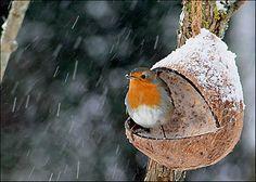 5 astuces pour bien photographier la neige