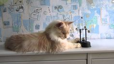 Кот  и  маятник.Cat and pendulum.