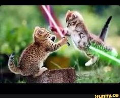 Image result for starwars cats