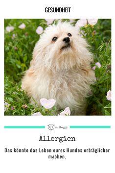 || #Hund || Ideen || #Hunde || Tipps || Tricks || Ideen || Liebe || Welpen || Bilder || #Gesundheit
