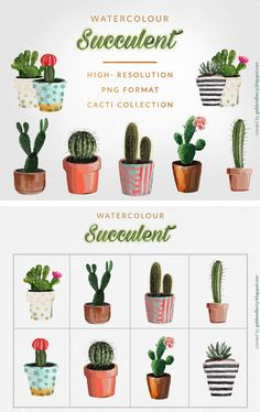 FREE watercolour succulents and cacti images to use in personal and commercial work.