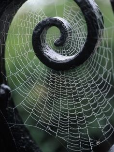Spider web on iron railing