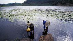 Jamais une espèce vivante n'a eu sur la Terre autant d'impact que l'Homme, pourtant nous n'avons qu'une planète. Aujourd'hui le monde prend conscience que nos modes de développement ne sont pas durables et que nous allons devoir profondément changer notre rapport à la nature pour préserver la vie sur terre... http://www.rfi.fr/emission/20160109-1-france-afrique-reserves-eau-douce-humanite-danger-bayou