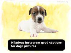 8 Best Dog Images
