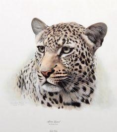 "Charles Frace' - ""African Leopard"""