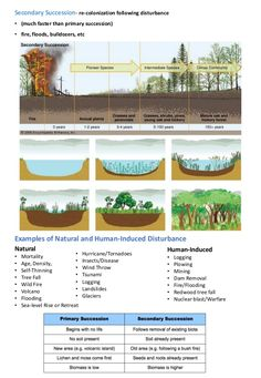 Ecological Succession Succession- changes which increase the community complexity over time. High School Biology, High School Science, Life Science, Science Lessons, Earth Science, Ecological Systems Theory, Ecological Pyramid, Nutrient Cycle, Ecological Succession