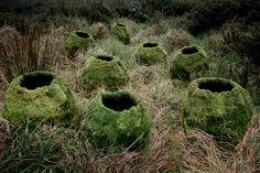 Another Green World » Ellie Davies