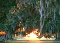 Fountainbleu State Park, Louisiana