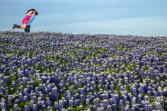 Sea of Bluebonnets  www.ryangreenphotography.com  Austin Wedding & Engagement Photography - photos by Ryan & Lindsey Green