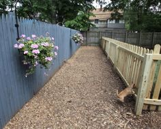 Dog Run - Like the use of wood fencing instead of mesh - this is still see-thru so they wouldn't freak out!
