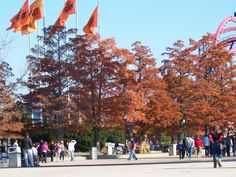 Fall colors highlight park entrance. Excellent day for amusement park attendance. Park extended hours to 10 PM though I left at around 9:00 PM to 10:00 PM completely worn out.