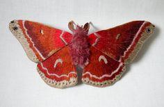Бабочки — это удивительные существа, которые поражают многообразием форм и расцветок. В мире их насчитывается более 158 000 видов. Обитают бабочки на всех континентах, за исключением Антарктиды. Неудивительно, что эти великолепные крылатые создания всегда были и остаются источником вдохновения в творчестве многих мастеров. Представляю вашему вниманию подборку текстильных бабочек, выполненных разными мастерами.
