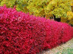 Privacy Landscaping, Outdoor Landscaping, Outdoor Gardens, Garden Crafts, Garden Projects, Garden Art, Garden Shrubs, Garden Trees, Creative Landscape
