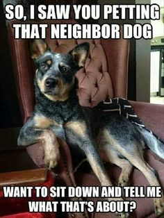 dog jealousy~ACD