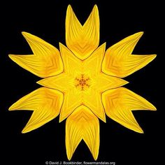 Flower Mandalas. Copyright David J. Bookbinder. For a free Flower Mandalas screensaver or illustration visit flowermandalas.org.  #flower #mandala #meditation #mandala_sharing #mandalamaze #flowermandalas #flowermandala #floral_secrets #flowerstagram #arte_minimal #beautiful_mandalas #mandaladesign #fotocatchers #flowerlovers  #flowersofinstagram #photoart #flowerstalking #the_visionaries #flowerart #sweetdreamsdlf #AColorStory #awesomeflorals #naturelovers #ig_masterpiece #igmasterpiece…