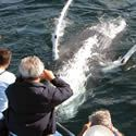 Whale Tours Newfoundland