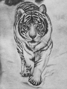 White tiger pencil drawing, done by Danielle Weingart
