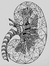 """anatomy- kidney"" pen on paper, 2015 #art #artist #ink"