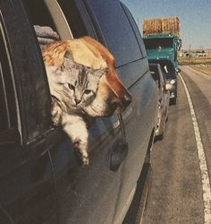 """""""OK, so I'm sticking my head out the window like you guys do… I don't see the big deal""""  viaobservando"""