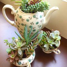 """A tia-avó da jornalista @iarabiderman trouxe este jogo de chá quando fugiu da Polônia no começo da segunda guerra. Iara autora do blog de dança """"Deu Baile"""" decidiu dar vida a esta herança. Mais um trabalho que amamos fazer  #oitominhocas #suculentas #customização #porcelana #decoração #plantinhas #ecofriendly #elo7br #presentecriativo"""