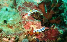 #underwater #photography #nudi #nudibranch photo by Me, Anilao, Batangas,  Philippines