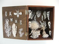 Katherine Morling, Nature Box, 2013 Antique box, porcelain and black stain, 30 x 30 x 30 cm