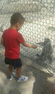 Fomentar en los niños el respeto y cuidado de los animales.