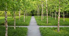 STEPHEN STIMSON ASSOCIATES | GREENWICH GARDEN Birch Grove, path, groundcover, Greenwich, Conneticut