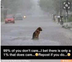 My heart broke. Poor dog!