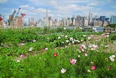 Rooftop farm NY