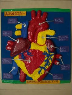 human heart model projects | cachedthe human child make between seven howmake human heart out