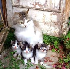 Adorable Cat Family