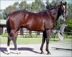 Memo(1991)Mocito Guapo- Chardona By Chairman Walker. Outcross In First 5 Generations. 34 Starts 13 Wins 13 Seconds 4 Thirds. $813,784. Multiple G1 Winner In Chile Champion 2 YO And 3 YO Colt In Chile. Won San Bernardino H(G2), Commonwealth BC S (G2), Triple Bend H(G3), 2nd Washington Park H(G2), Bel Air H(G2). Died In 2014.: