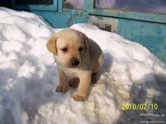 Je to šteniatko v snehu♥♥♥♥