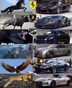 lvxcars Luxurious automobile BMW Audi Ferrari Lamborghini Buggatti - Reality Worlds Tactical Gear Dark Art Relationship Goals Luxury Sports Cars, Exotic Sports Cars, Cool Sports Cars, Best Luxury Cars, Sport Cars, Exotic Cars, Cool Cars, Luxury Suv, Luxury Garage