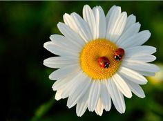 ladybugs meeting