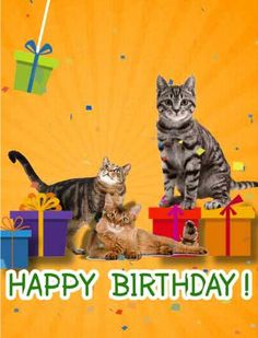 Happy Birthday With Cats Funny Cards
