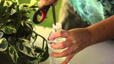 DIY Gardening: How to Make a Self-Contained Plant-Watering System for Vacation : Solving Plant Needs Plant Watering System, Plant Needs, Diys, Planters, Self, Layout, Vacation, How To Make, Gardening