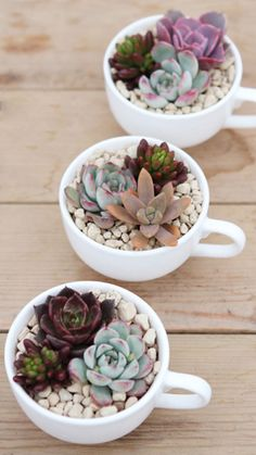 10 cool ideas to use the succulents in the decoration 10 coole Ideen, um die Sukkulenten in der Dekoration. Succulent Arrangements, Cacti And Succulents, Planting Succulents, Planting Flowers, Succulent Decorations, Terrarium Decorations, Propagate Succulents, Cactus Plants, Decoration Plante