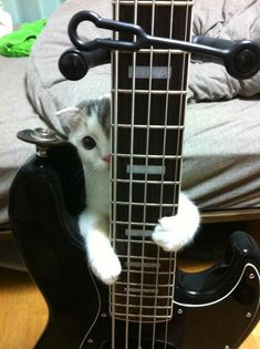 No, kitty, you may not play bass! (He knows the bass player always gets all the girls...)