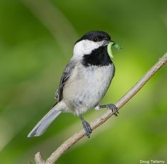 Native plants support good insects that birds need to feed their young. Tree Support, Scale Insects, Dogwood Trees, Tiny Bird, Large Animals, Native Plants, Bird Watching, Bird Feathers, Bird Houses