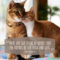 Animal Love Quotes, Cat Quotes, Funny Animal Videos, Funny Animals, Kitten Images, Cute Little Animals, Adorable Animals, Most Beautiful Cat Breeds, Cat Life