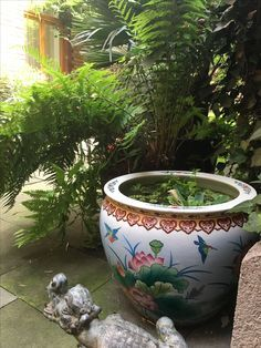 Container Water Garden Chinese Goldfish Pond In Pot