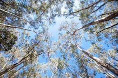 A pesar de que aumente el dióxido de carbono en la atmósfera, los bosques maduros, limitados en nutrientes, no lo absorberán, según un nuevo estudio. Los árboles adultos no solo no acumularán más carbono, sino que lo devolverán a la atmósfera. Este hallazgo demuestra que la única estrategia para limitar el cambio climático es reducir las emisiones de gases de efectos invernadero. Plants, Tinkerbell, Plant Parts, Life Science, Greenhouse Effect, Climate Change, Flora, Plant, Planting