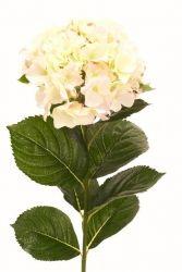 övriga blommor