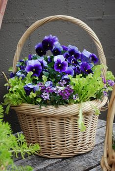 #pots #planters #pottery #containers  Spring basket ~ container garden