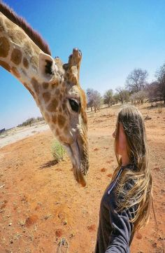 The himba village where the giraffe is living is located in Kamanjab, Namibia. This giraffe is tame and living with the traditional himba's. Backpacking, Giraffe, Camel, Africa, Meet, Goals, Animals, Backpacker, Felt Giraffe