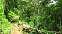 Salto de Caburní trail in Tope de Collantes. Close encounter with the immense nature and fauna & flora wonders! Travelling to Caribbean? Don't miss our blog post: blog.soulidays.co...