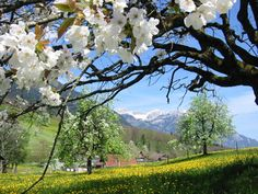 Beautiful, pinned from Verena Bachmann's Zangze site Post Hotel, Alpine Style, Bavaria, Germany Travel, Beautiful Landscapes, Scenery, Nature, Plants, Ancestry