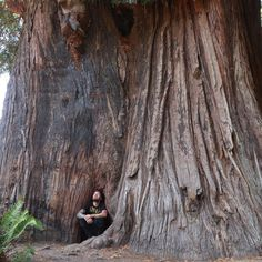 How is this a real thing? 1,800 year old living tree.